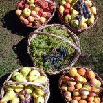 Frutas recién cosechadas