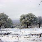 Algarrobos nevados